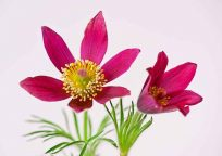 KK013_FlowerPower_Wasiczek