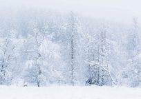KK041_Winterwald_Bosboom_CMYK