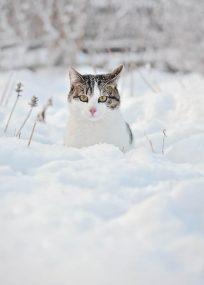 PK391_Winterkatze_magda_990