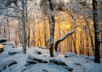 PK547_Winterleuchten_Hummel_bearb_a_cmyk_990