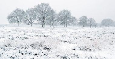PP004_Winterlandschaft_Bosboom_bearb_990