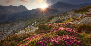 PP017_Bergpanorama_mit_Rhododendron_Bofan_panorama_990